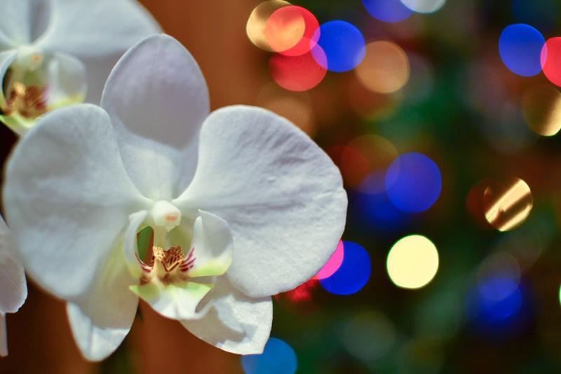 Nikon_35_1.8_dx_image_sample_18.jpg