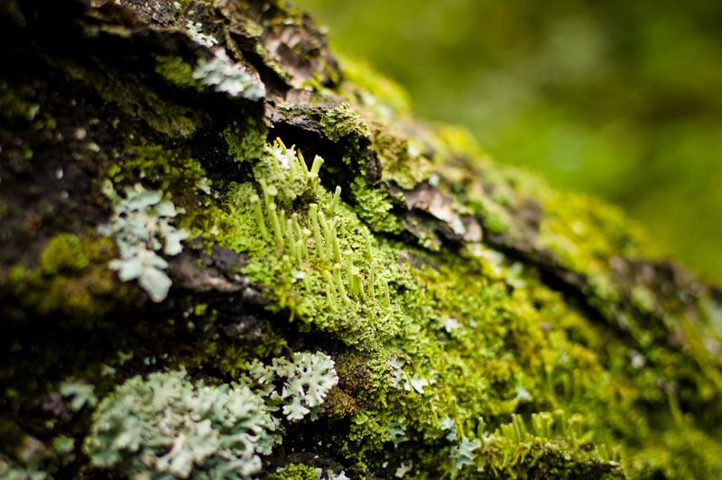 Nikon_35_1.8_dx_image_sample_32.jpg